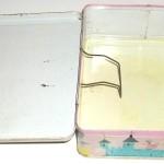 1959 Carnival Lunch Box