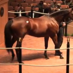 May 29 American Thoroughbred fetches $10 Million at Auction Forbes